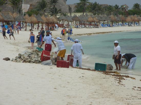Grand Bahia Principe Tulum: staff clearing stones from the sea