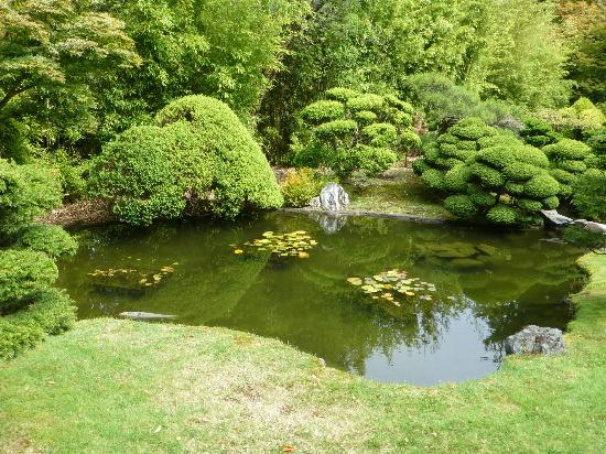 Pond in the garden picture of japanese tea garden san for Koi pond japanese tea garden san francisco