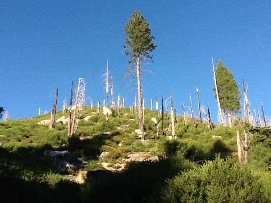 Panoramic Point : Ghost trees and young trees