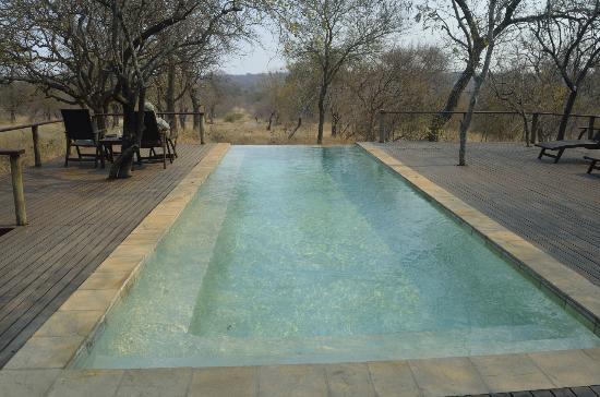 Toro Yaka Bush Lodge: Infinity pool overlooking the watering hole.