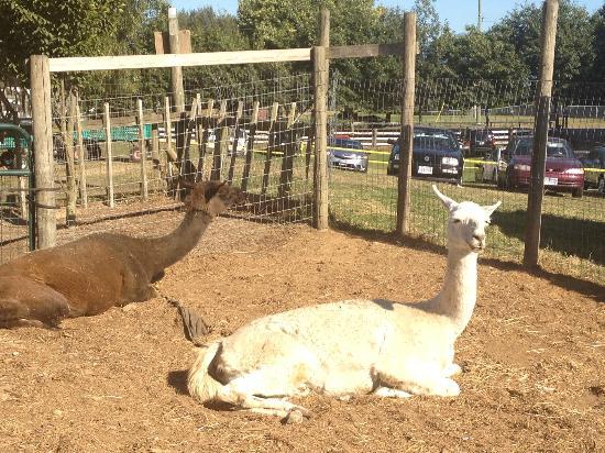 Applebarn at Taves Family Farms : The Petting Barn
