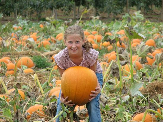 Applebarn at Taves Family Farms : Pumpkin Patch
