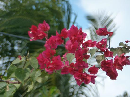 Grand Royal Antiguan Beach Resort: flowers