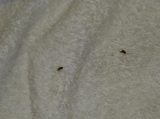 Mitsis La Vita Beach Hotel: Cockroaches