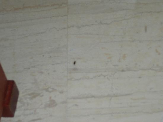 Mitsis La Vita Beach Hotel: Cockroach