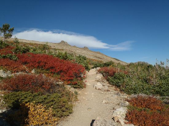 Flattop Mountain Trail: Fairly high, before the vegetation runs out