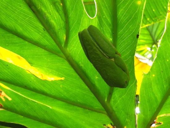 Posada Andrea Cristina: Treefrog