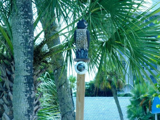 Gulfview Manor Resort: the owl, overlooking the pool
