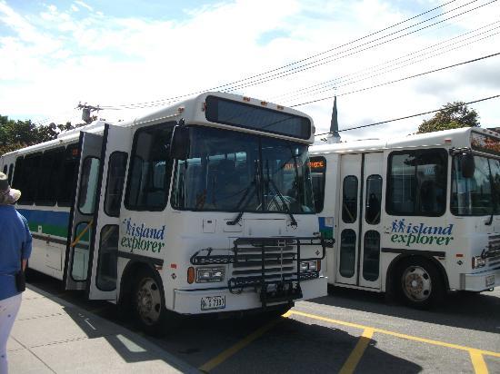 Village Green: Départs Island Explorer(autobus gratuit)
