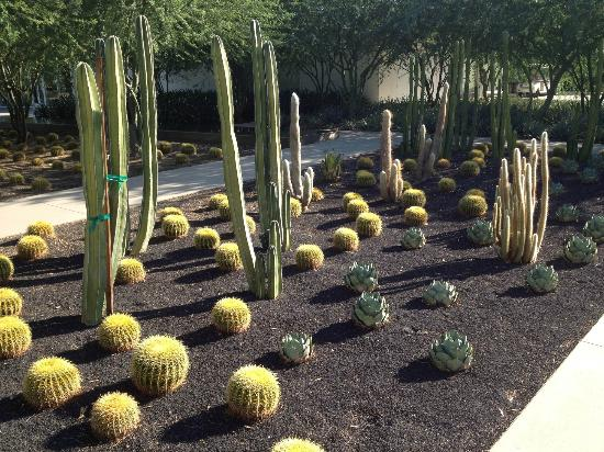 Sunnylands: Lots of Desert Plants