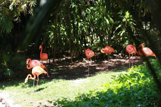 إيبيروستار كيتزال أول إنكلوسف: Flamingo 