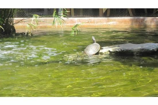 Iberostar Quetzal Playacar: Wild life