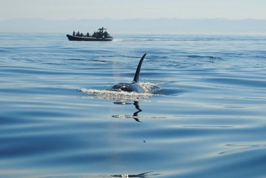 Eagle Wing Whale Watching Tours: And he went right under our boat