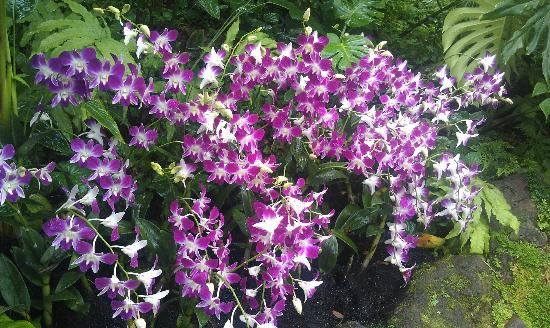 National Orchid Garden: Floods Of Orchids