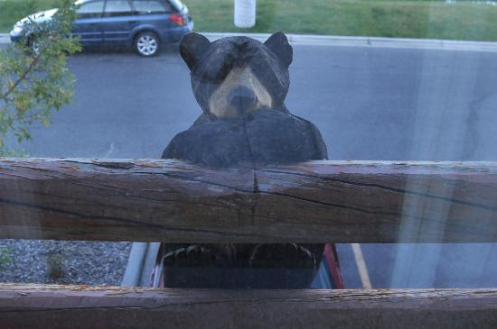 BEST WESTERN PLUS Kelly Inn & Suites: Bear Peeking In Room Window!