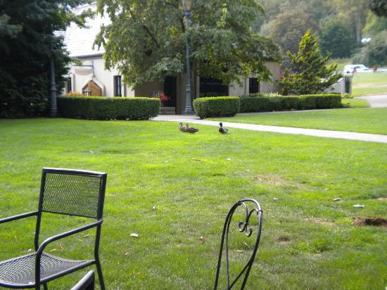 Chateau Ste. Michelle Vineyards: more ducks