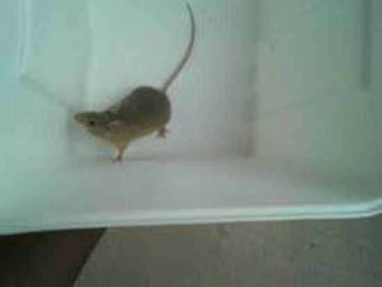 Farmington Inn: Mouse we caught