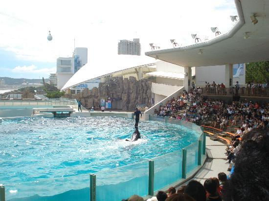 Seal performance - Picture of Kamogawa SeaWorld, Kamogawa - TripAdvisor