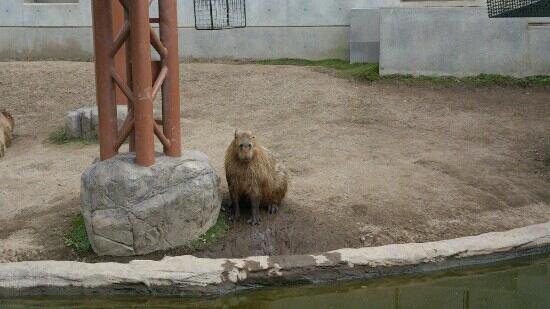 ペンギン遊泳 - Picture of Asahiyama Zoo, Asahikawa - TripAdvisor