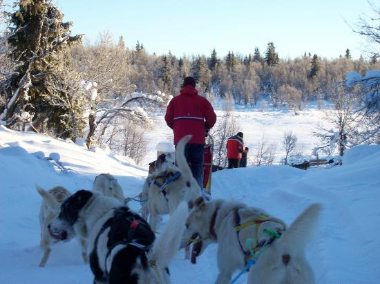 Hollandsk Gjestehus: Dog sledding in Peer Gynt Rike