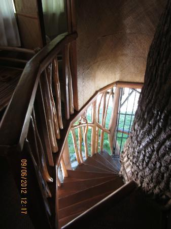Laiya Coco Grove Resort: The stairs into the treehouse