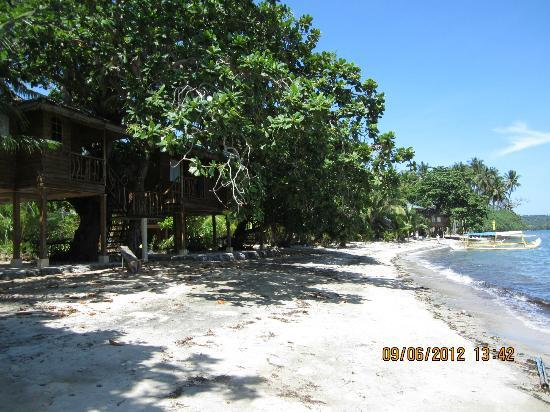 Laiya Coco Grove Resort: The larger treehouses right on the beach