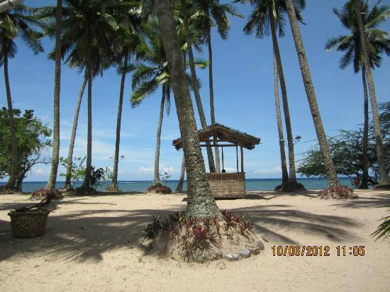 Laiya Coco Grove Resort: View of the sea from the clubhouse