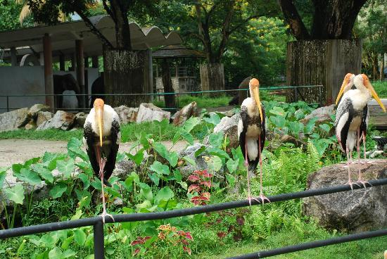 Ampang, Malesia: Птицы в Зоо