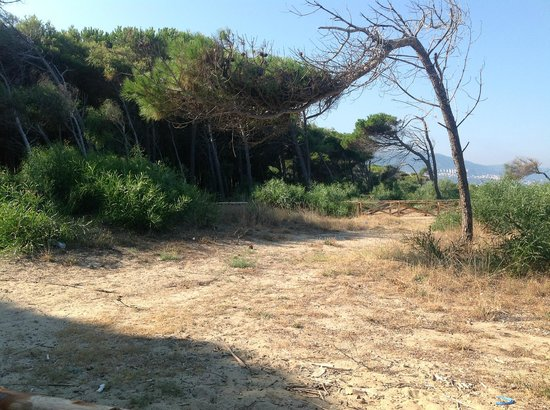 Residenza L'Antico Borgo: Pineta