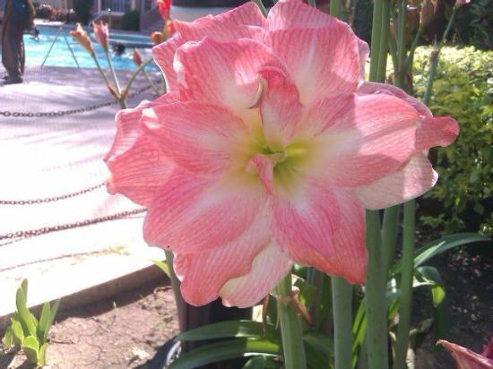 Hotel Kohinoor: Garden