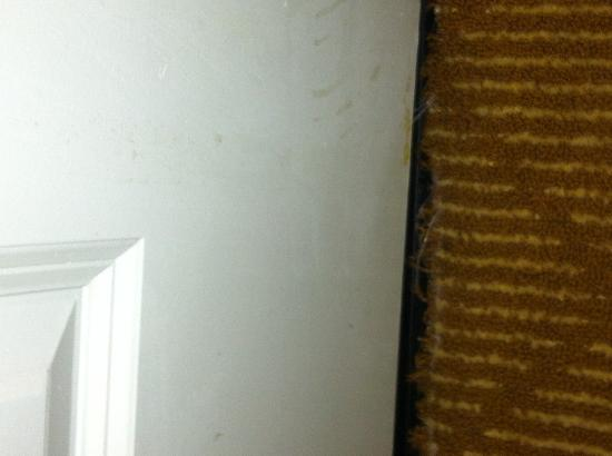 Residence Inn Tampa Downtown: Frayed carpet in room 318