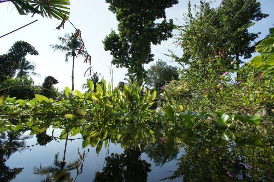 oasis thai spa bästa dejtingsajten