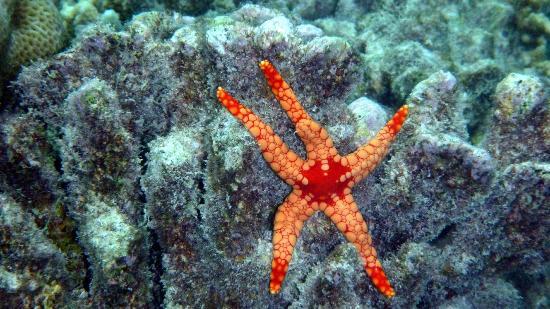 Diamonds Thudufushi: Stella marina