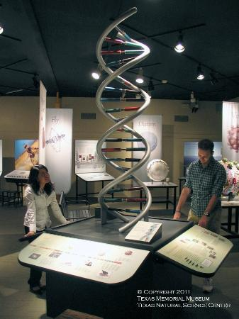 Texas Memorial Museum: Explore Evolution Exhibit