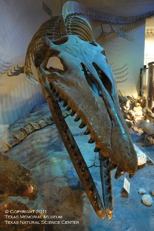 Texas Memorial Museum: Onion Creek Mosasaur