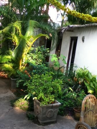 Anokhi Garden Guest House & Cafe: the lovely back garden
