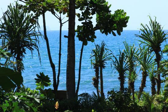 Villa Monyet Java: The view from Family Surf