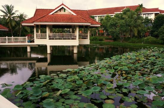 Sofitel Angkor Phokeethra Golf and Spa Resort: Pond.