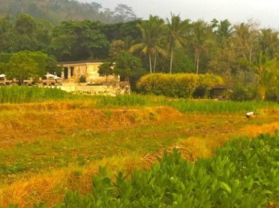 Amanjiwo Resorts: view of the resort from the tobacco fields