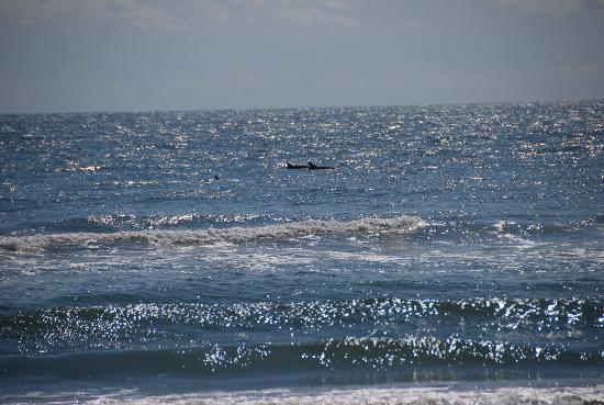 Ateague Beach Chincoteague Island Va