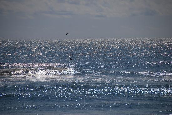 Assateague Beach: Chincoteague Island, VA