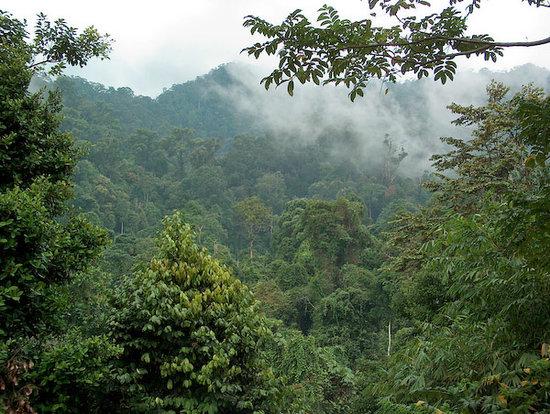 Gunung Leuser National Park, Indonesia: Jungle Lodge