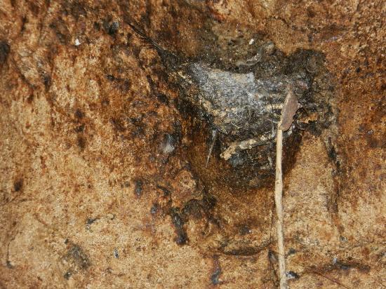 写真Gomantong Cave Sandakan枚