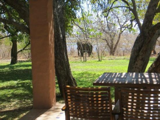 Sanctuary Chobe Chilwero : View from room