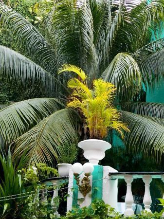 Maya del Mar: gardens