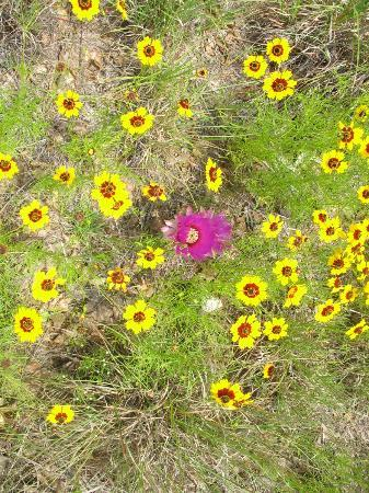 Enchanted Rock State Natural Area: Beautiful flowers