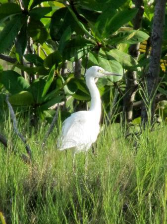 Palm Island Resort & Spa: egret