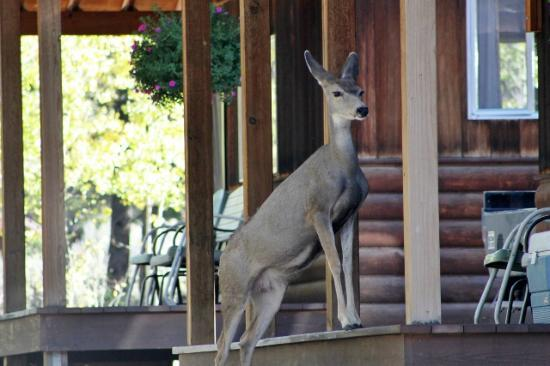 Pleasant View Resort : Daily visiting doe