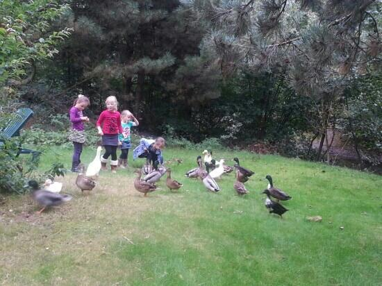 Center Parcs De Kempervennen: feeding the ducks