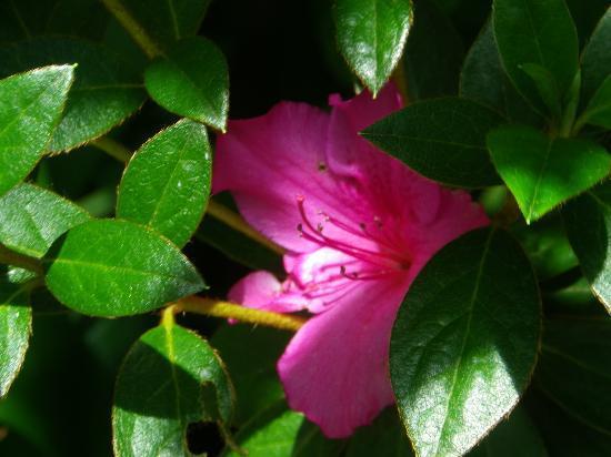 Masescha Country Estate: Flower at Masescha